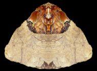 ancient artifacts eaf00daca0f99fc2172cfd0119f5949d