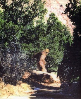 Bigfoot 18
