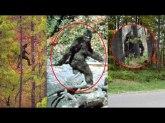 Bigfoot sddefault