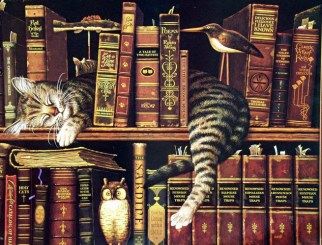Books Cat 916488c2s0nnp0hx (1)