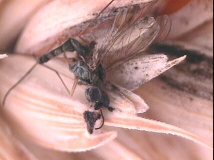 Joanna Emery cropfly1