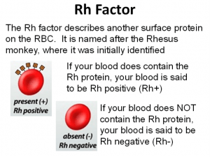 RH Negative Blood Rh-Factor-300x225