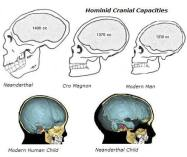 RH Negative Blood cranial_capacities