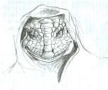 Tall White Reptilian Aliens DracoReptilianHooded1