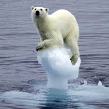 Climate Change Polar Bear images