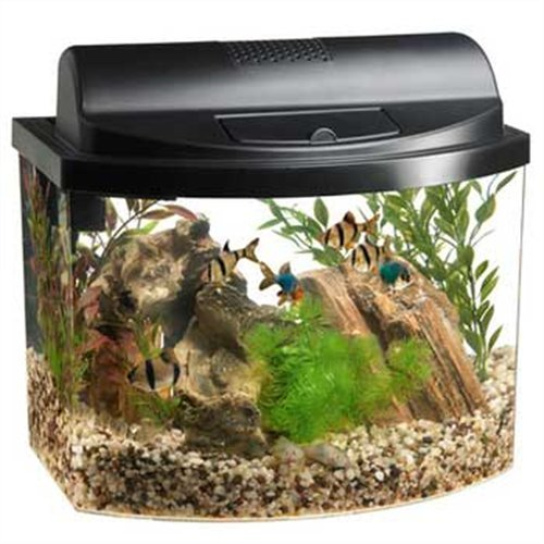 Best betta tank reviews of the best betta fish tanks of 2016 for Aqueon fish tank