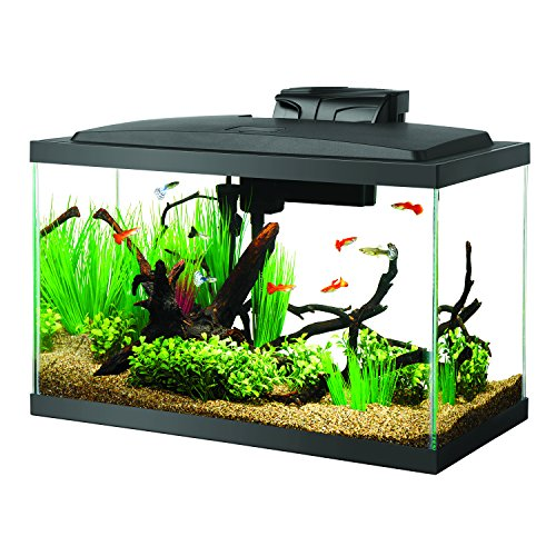 A Guide To Finding The Best 10 Gallon Fish Tank For You