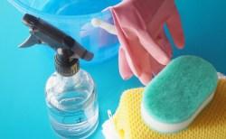 水槽の藻の掃除の仕方は種類で違う?その方法は?