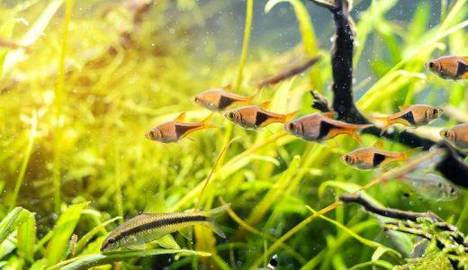観賞魚用浄水器の必要性とは?メリット・デメリットも解説