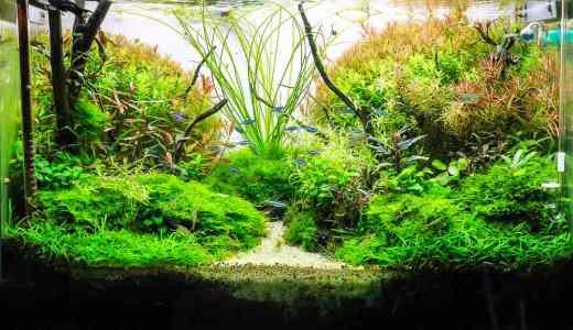 水槽レイアウトのポイントを解説!きれいな水景を長持ちさせるには