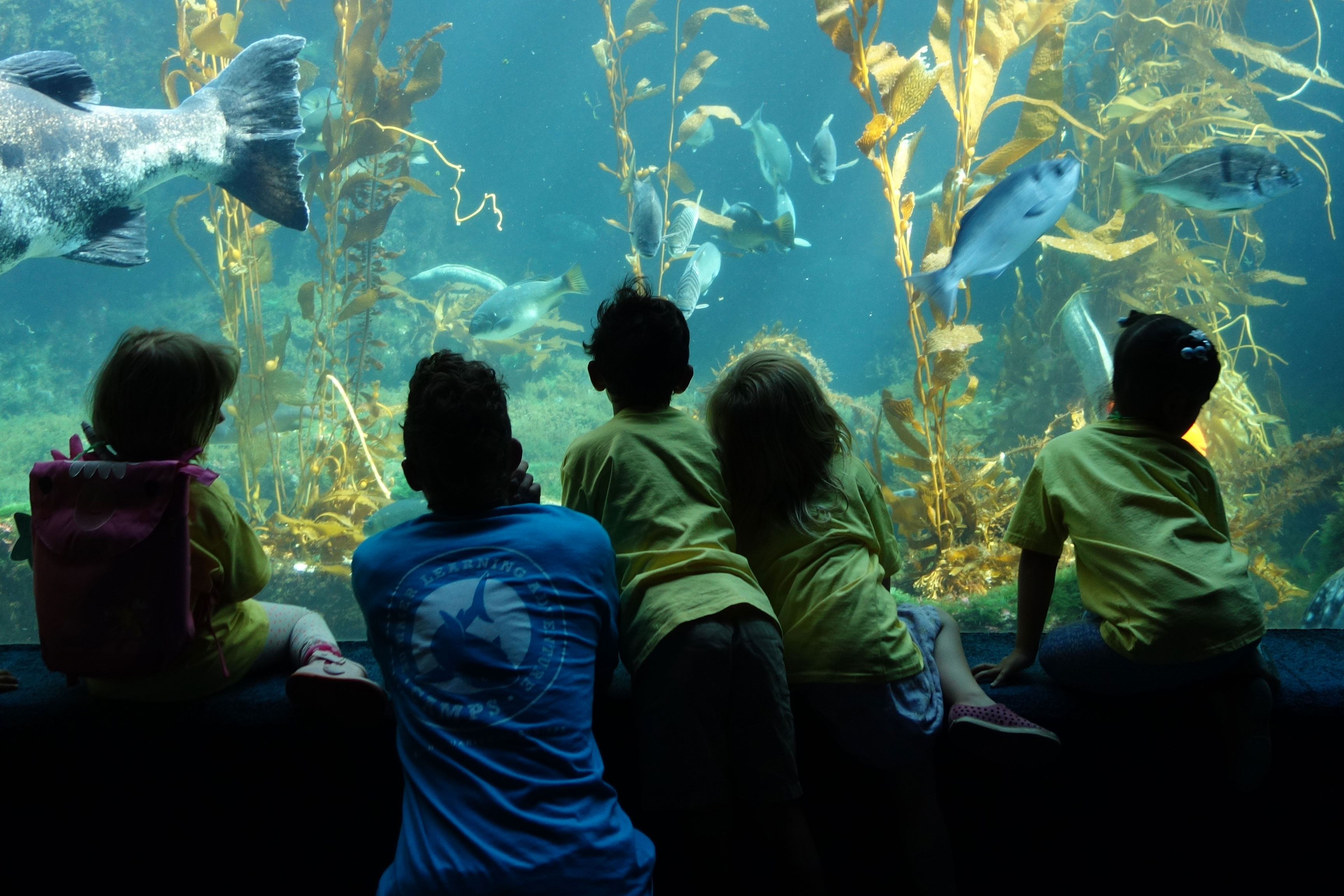 Childrens Birthday Parties Birch Aquarium At Scripps