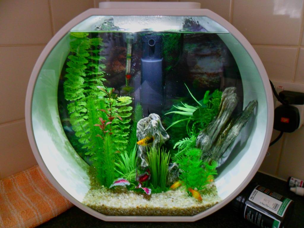 Siamese Fighter Fish Aquarium Ideas Aquarium Addicts