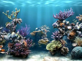 http://coopeer.com/images/fish-tank-widescreen-wallpaper-z4sqd/download-fish-tank-widescreen-wallpaper-52402