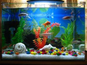 http://cdn.decoist.com/wp-content/uploads/2013/03/Playful-and-contemporary-fish-tank.jpg