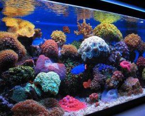 the best led lighting for reef tanks