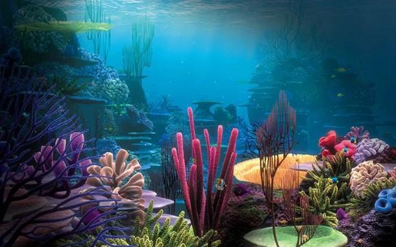 the best aquarium background for types
