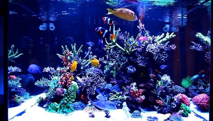Aquarium Water Change - How you can ?