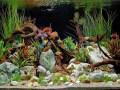 Tropical freshwater aquarium fish tank total care guide
