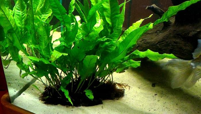 5 Best Freshwater Aquarium Plants Guide for Beginners