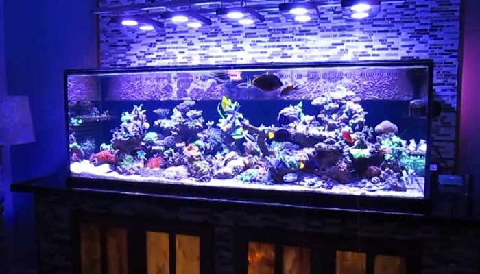 How to set up a Saltwater Fish Tank for Keep your saltwater fish