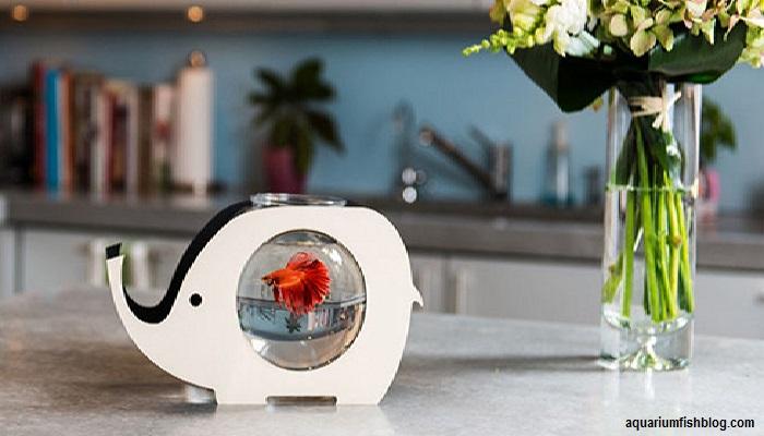 Fish Bowl Aquarium Care- How to maintenance your fish bowl?
