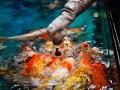 feed your aquarium fish