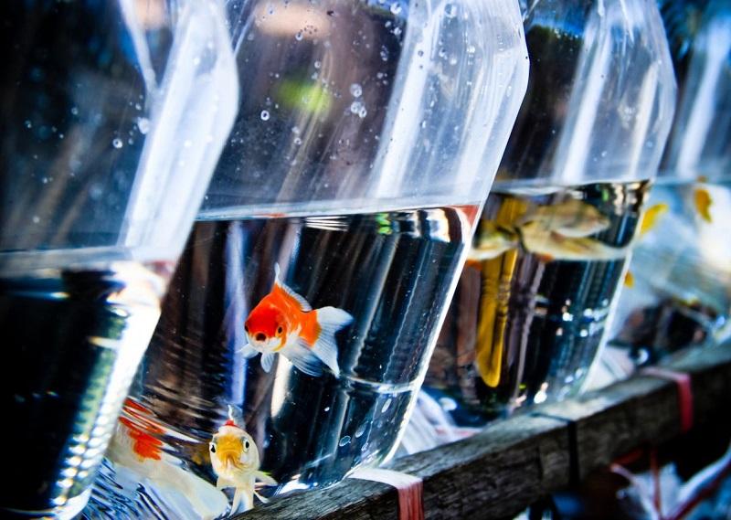 new fish