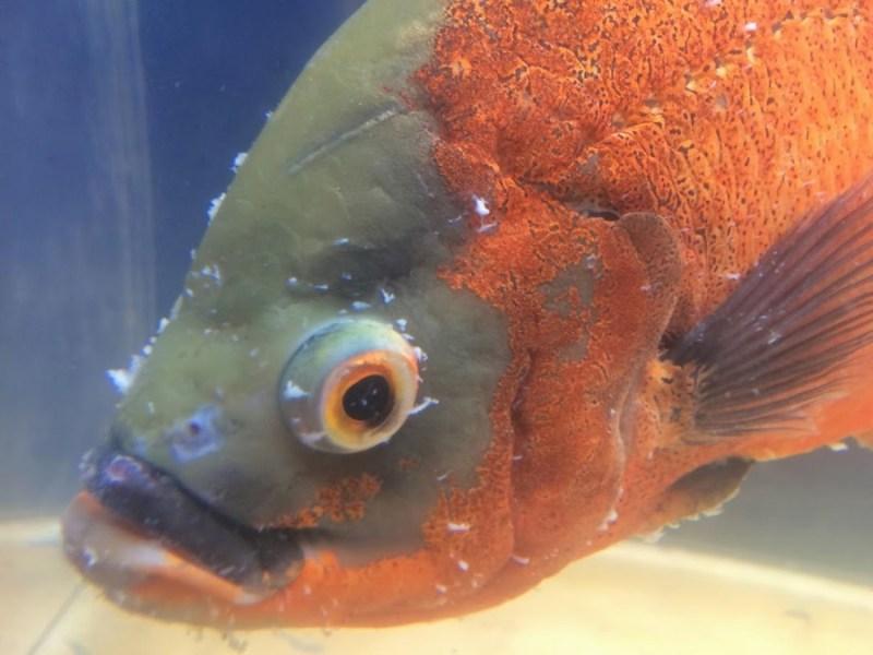 freshwater fish die