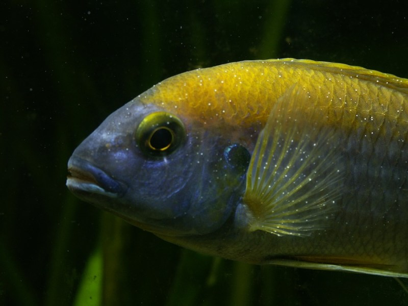 cure white spot fish diseases