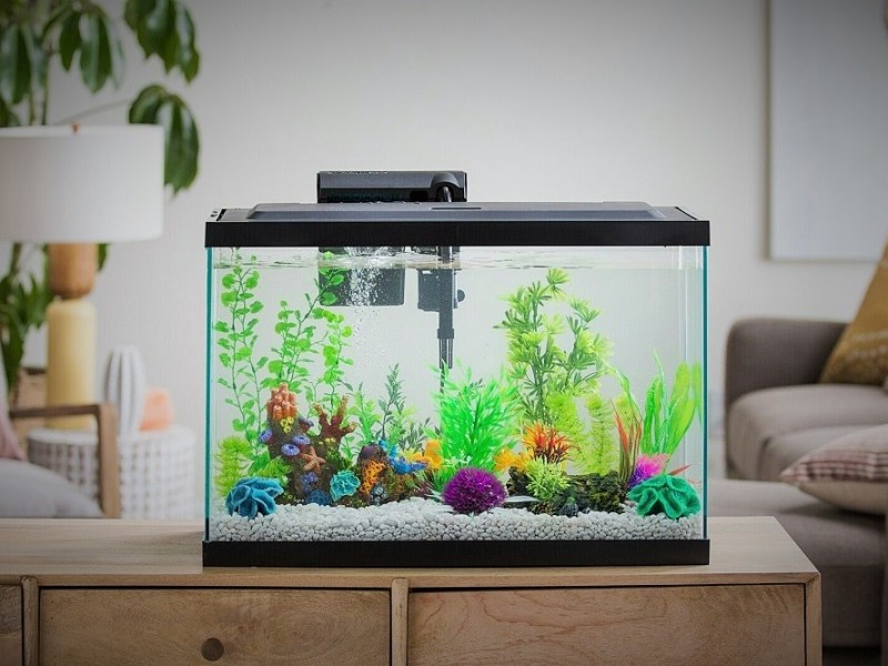 new aquarium