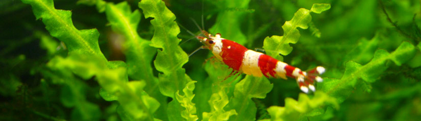 Aquarium Plant Care