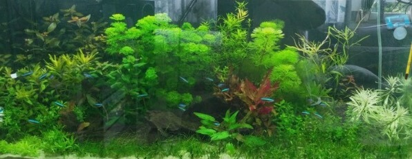 voorbeeld aquarium