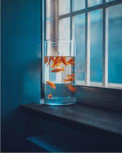 vissen in aquarium