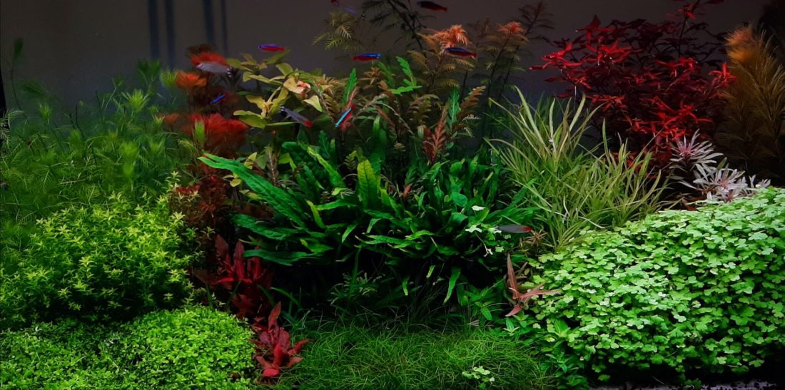 aquarium blog