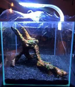 Droge start aquarium