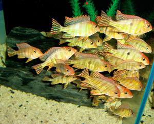 Tropical Fish 19