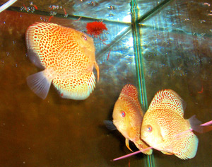 Tropical Fish 21