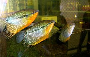Tropical Fish 25