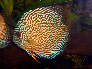 Tropical Fish 34