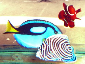 Tropical Fish 59
