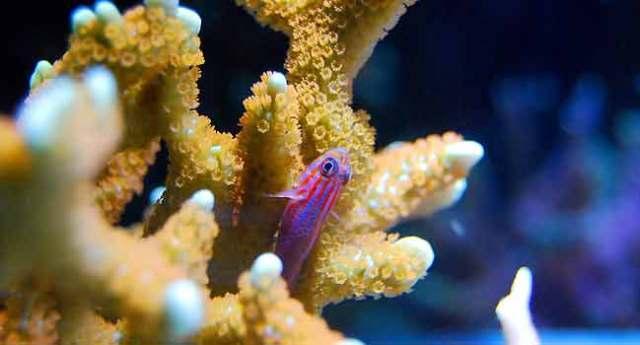 Optimal Tropical Fish Temperature