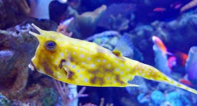 Tropical Fish Store