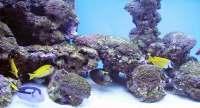 saltwater aquarium parasites