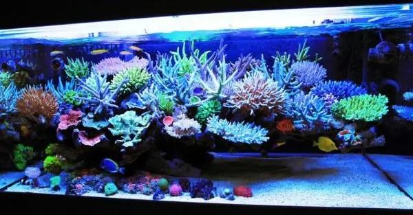Types Of Saltwater Aquariums In Order Of Difficulty Aquarium Tricks