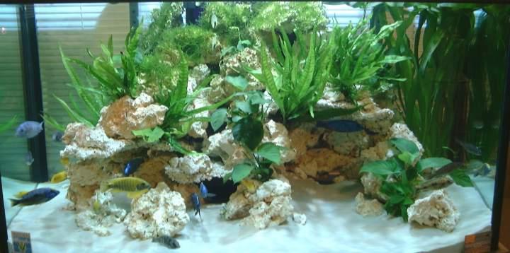 decor en eau avec les poissons et les plantes