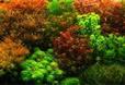 Голландский аквариум. Золотые правила оформления.