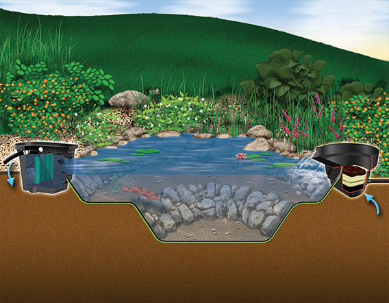 Backyard Ponds, Water Features, Water Gardens By Aquascapes
