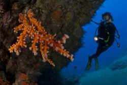 plongée diving lanzarote corail
