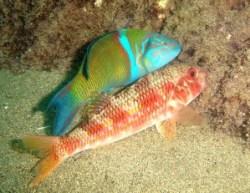 Spécialité Identification des poissons Padi plongée Lanzarote