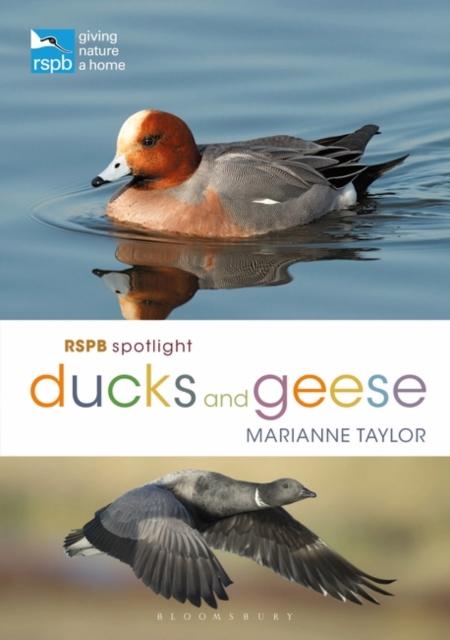 RSPB Spotlight Ducks and Geese